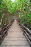 Xinfeng mangroveslinga i Hsinchu, Taiwan Royaltyfri Bild