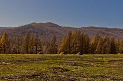 Xing'an region at autumn,Inner Mongolia, China Royalty Free Stock Photo