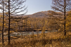 Xing'an region at autumn,Inner Mongolia, China Stock Images