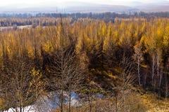 Xing'an region przy jesienią, Wewnętrzny Mongolia, Chiny Zdjęcia Stock