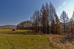 Xing'an region przy jesienią, Wewnętrzny Mongolia, Chiny Obrazy Stock