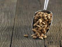 Xinjiang almond Royalty Free Stock Image