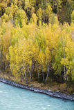 Xinjiang, china: autumn foliage Stock Image