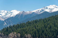 XINJIANG, CHINA - 9 de maio de 2015: Montanha da neve no lago heaven de T Fotografia de Stock