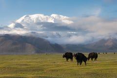 XINJIANG, CHINA - 21 de mayo de 2015: Mustagh Ata Mountain en el caracul L Imágenes de archivo libres de regalías