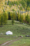 Xinjiang, china: hillwood landscape Royalty Free Stock Photography
