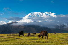 Mustagh Ata Mountain at Karakul Lake in Pamir Mountains, Akto County, Kizilsu Kirghiz Autonomous Prefecture, Xinjiang, China.