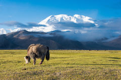 XINJIANG CHINY, Maj, - 21 2015: Mustagh Ata góra przy Karakul L Fotografia Royalty Free