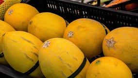 Xinjiang Hami melon Arkivbild