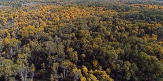 Xinjiang: overlooking the forests of Populus euphratica forest stock photography