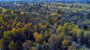 Xinjiang: przegapiać lasy Populus euphratica las fotografia royalty free