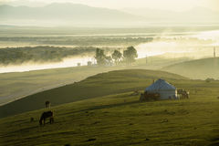 Xinjiang Shuttleworth pasture in the morning Stock Photos
