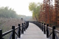 Xisha wetland in Chongming island stock images