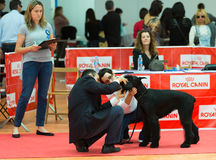 XIX national dog exhibition of Catalonia Royalty Free Stock Photography