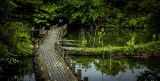 Xixi moerasland royalty-vrije stock fotografie