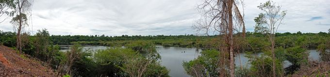 Panoramic photography of the Amazon rain forest on the Jauperi river royalty free stock photography