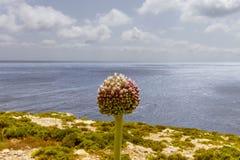 Xlendi Bay Gozo Royalty Free Stock Images