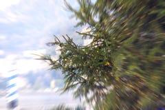 Xmas树,被弄脏的行动 颜色女儿图象母亲二 免版税库存照片