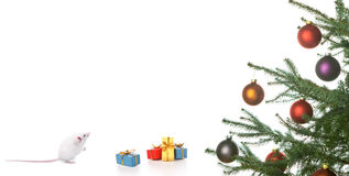 Xmas. Mouse getting xmas presents .iisolated on a white background Royalty Free Stock Images