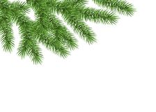 Xmas background with spruce branch. Green fir. Realistic Christmas tree. Vector illustration for  cards, banners, flyers, New year party posters Stock Images