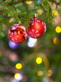 Two red balls on natural fir christmas tree branch. Xmas background - two red balls on natural fir christmas tree branch indoor Royalty Free Stock Photo