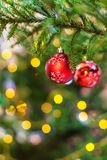 Two red balls on green christmas tree twig indoor. Xmas background - two red balls with snowflake on green natural christmas tree twig indoor Royalty Free Stock Photos