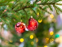 Two red balls on natural christmas tree branch Stock Photography