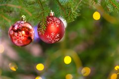 Two red balls on christmas tree branch indoor stock photos