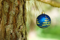 Xmas ball. Hanging in a pine tree Royalty Free Stock Photo