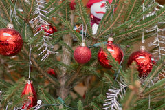 Xmas bauble on tree Royalty Free Stock Photos