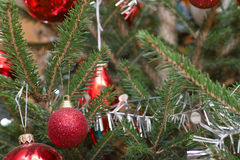 Xmas bauble on tree Stock Images