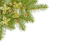 Xmas branch. Green christmas branch in the corner of a white sheet Stock Photography
