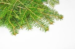 Xmas chrismasbackground firs. Firs green xmas chrismasbackground firs copy space stock photography