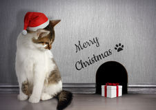 Xmas congratulate concept, Funny cat with santa hat and gift Royalty Free Stock Photos