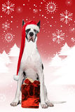 Xmas Dane Stock Photography