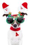 Xmas dog. With funny sunglasses Stock Photography