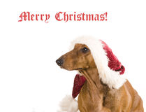 Xmas dog isolated Stock Images