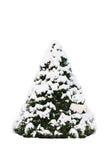 Xmas drzewo z śniegiem Obrazy Stock