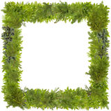 Xmas fir tree photo frame Royalty Free Stock Images