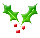 Xmas holly ornament. Or decoration isolated on white background Royalty Free Stock Photo