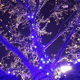 Xmas i Salt Lake City Royaltyfri Fotografi
