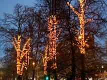 Xmas illumination on trees in winter Royalty Free Stock Photography