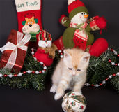 Xmas kitten Royalty Free Stock Images