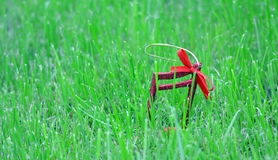 Xmas music notes on a green grass background Royalty Free Stock Image