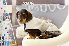 Xmas photo of cute dog Stock Images