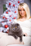 Xmas portrait of a cat Royalty Free Stock Photos