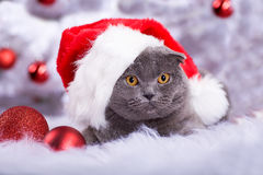 Xmas portrait of a cat Stock Images