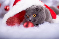 Xmas portrait of a cat Stock Image