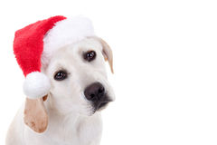 Christmas Xmas Santa Hat Pet Animal Puppy Dog. Christmas pet animal Labrador puppy dog dressed up and wearing Xmas Santa hat with white space Royalty Free Stock Photography