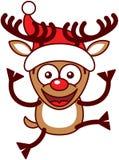 Xmas-ren med stora horn på kronhjort som hoppar och bär en jultomtenhatt Arkivfoto